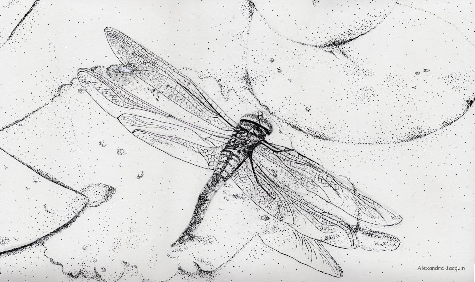 encre de chine libellule
